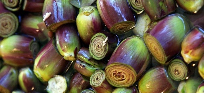 Artichoke Season and Preservation