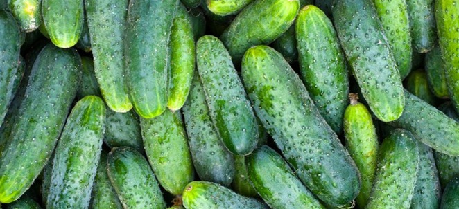 Cucumber Selection, Storage, and Handling