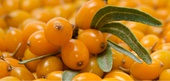 Seabuckthorn Nutrition Facts
