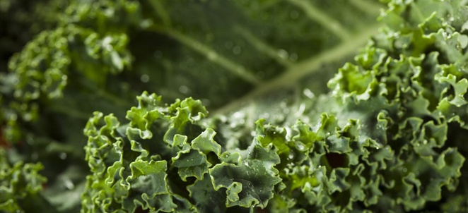 Kale Selection, Storage, and Handling
