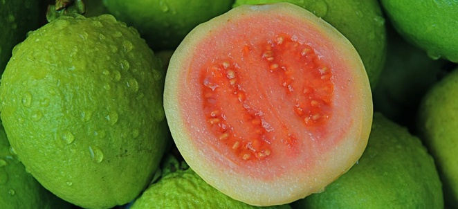 Guava Facts