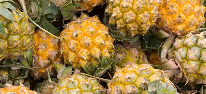 Pineapple Selection, Storage, Handling