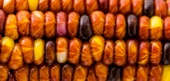 Corn Recipes and Flavor Pairings
