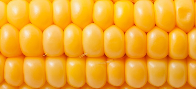 Corn History and Factoids