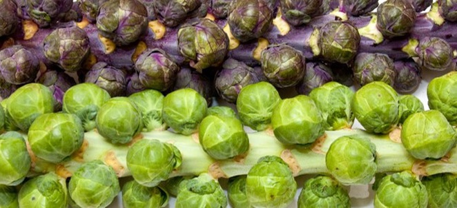 Brussels Sprouts Recipes and Pairings