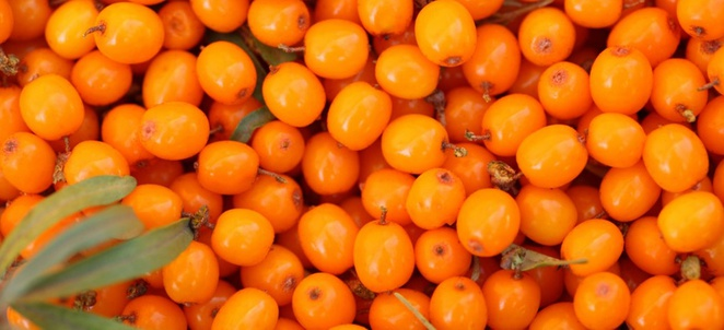 Seabuckthorn Facts