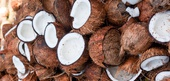 Coconut Selection, Storage, and Handling