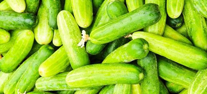 Cucumber Facts