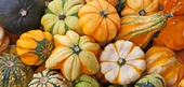 Pumpkin Selection, Storage, and Handling