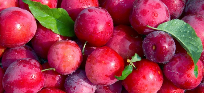 Plum Factoids