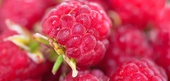 Raspberry Facts