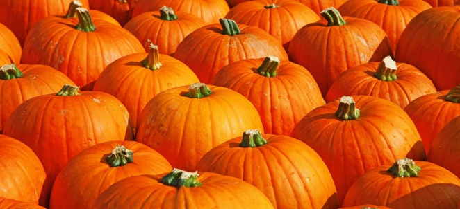 Pumpkin Season and Preparation